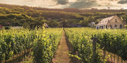 Visit of vineyards in Bormes-les-Mimosas
