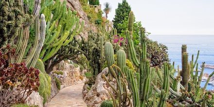 Visit the exotic gardens of Eze-Sur-Mer